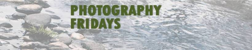 PHOTOGRAPHY FRIDAYS FEATURED IMAGE